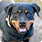 Adopt A Pet :: CANDY