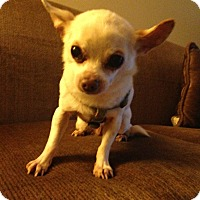 Adopt A Pet :: Anabelle - Winters, CA