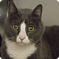Adopt A Pet :: Chandler - Lincoln, NE