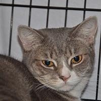 Adopt A Pet :: Debra - Taftville, CT