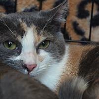 Adopt A Pet :: Sansa - Greer, SC