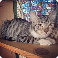 Adopt A Pet :: Christopher - Raleigh, NC