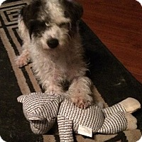 Adopt A Pet :: Reggie - Woodland, CA