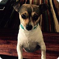Adopt A Pet :: LULU - Sun Valley, CA