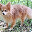 Adopt A Pet :: Hefner B Tidwell