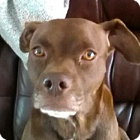 Adopt A Pet :: Lulu - Jacksonville, FL
