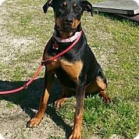Adopt A Pet :: Elena - Seaford, DE