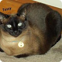 Adopt A Pet :: Tess and Thai - Harrisonburg, VA