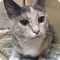 Adopt A Pet :: Pia Zadora - Morganton, NC