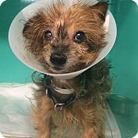 Adopt A Pet :: Roger - Oak Ridge, NJ