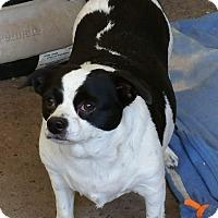 Adopt A Pet :: REXY - Gustine, CA
