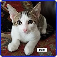 Adopt A Pet :: Benji - Miami, FL