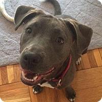 Adopt A Pet :: Cupcake - Washington, DC