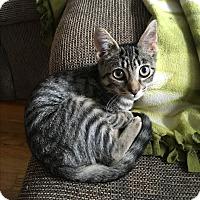 Adopt A Pet :: Kia - Berkley, MI