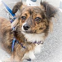 Adopt A Pet :: Balafar - Loudonville, NY