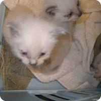 Adopt A Pet :: BAILEY - Jacksonville, FL