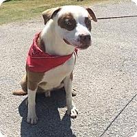 Adopt A Pet :: Malbec - Staunton, VA