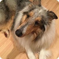 Adopt A Pet :: King - Chantilly, VA