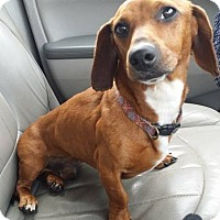 Adopt A Pet :: WINSLOW - Lubbock, TX