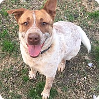 Adopt A Pet :: Justine - Blountstown, FL