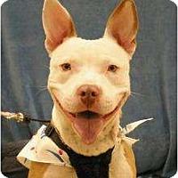 Adopt A Pet :: Radar - Sacramento, CA