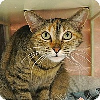 Adopt A Pet :: Roux - Foothill Ranch, CA
