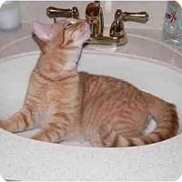 Adopt A Pet :: Charlie - Catasauqua, PA