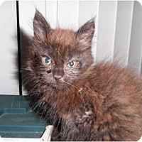 Adopt A Pet :: Merlin - Warren, MI