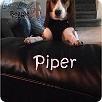 Adopt A Pet :: Piper - Yardley, PA