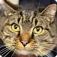 Adopt A Pet :: Regina - Columbia, MD