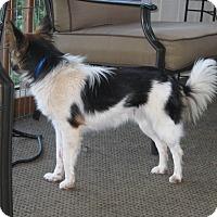 Adopt A Pet :: Tara - Charlottesville, VA