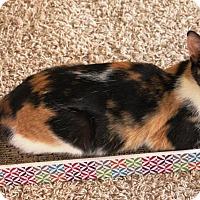 Adopt A Pet :: Reeses - Orange, CA