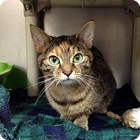 Adopt A Pet :: B-7 - Triadelphia, WV