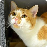 Adopt A Pet :: Alexander - Arlington/Ft Worth, TX