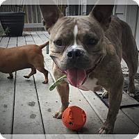 Adopt A Pet :: Star - New Orleans, LA