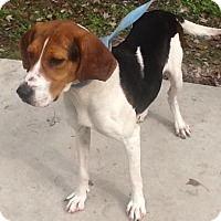 Adopt A Pet :: Truffles - Summerville, SC