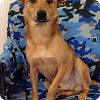 Adopt A Pet :: Dasher - Knoxville, TN