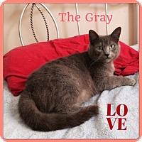Adopt A Pet :: The Gray - Harrisburg, NC