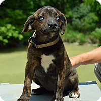 Adopt A Pet :: Breck - Pleasant Plain, OH