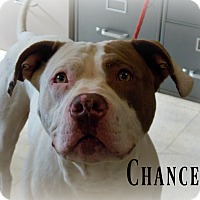 Adopt A Pet :: Chance - Defiance, OH