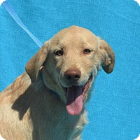Adopt A Pet :: **DRAKE** MEET OCT 22ND! - Mukwonago, WI