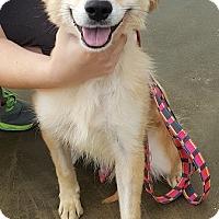 Adopt A Pet :: Sunny - Knoxville, IA