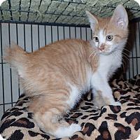 Adopt A Pet :: Pluto - North Wilkesboro, NC
