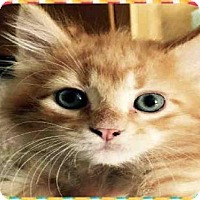 Adopt A Pet :: REESES - Peoria, IL