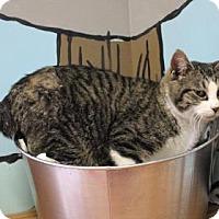Adopt A Pet :: Cadet - West Des Moines, IA