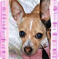 Adopt A Pet :: Daffodil - San Jacinto, CA