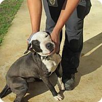 Adopt A Pet :: Ami - Rocky Mount, NC