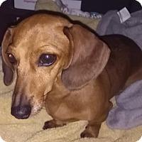 Adopt A Pet :: Kaydee - Humble, TX
