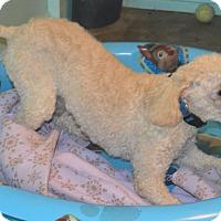 Adopt A Pet :: Hyde - Prole, IA