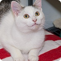 Adopt A Pet :: Ozzie - Elmwood Park, NJ
